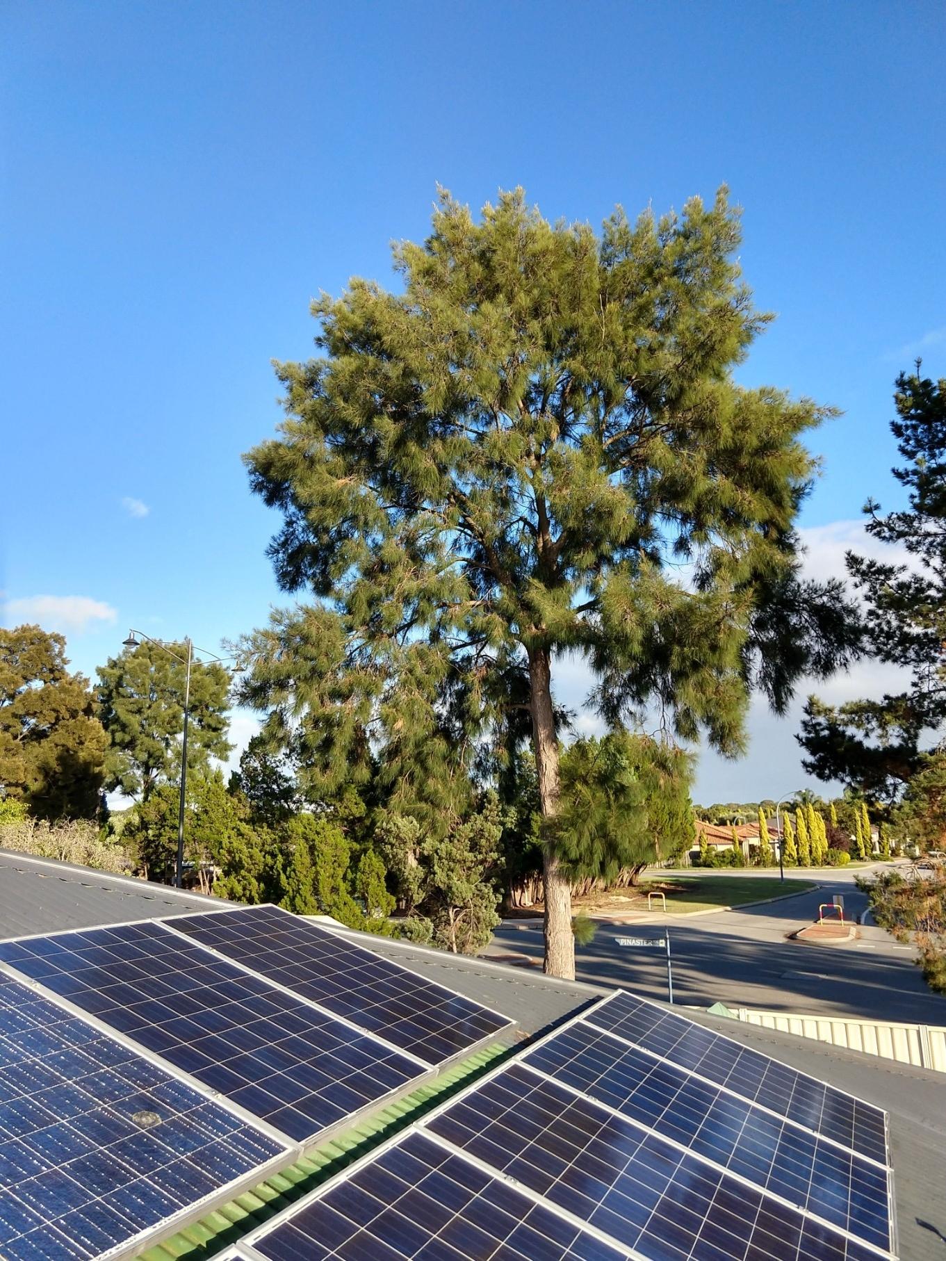 Pine Tree Near Solar Panels